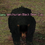 Picture of Manchurian Black Bear Cub