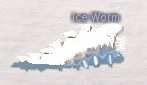 Picture of Ice Worm (Turquoise)
