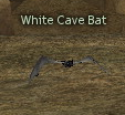 Picture of White Cave Bat